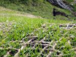 Gletscherbahnen Kaprun AG – Begrünung in extremen Hochlagen