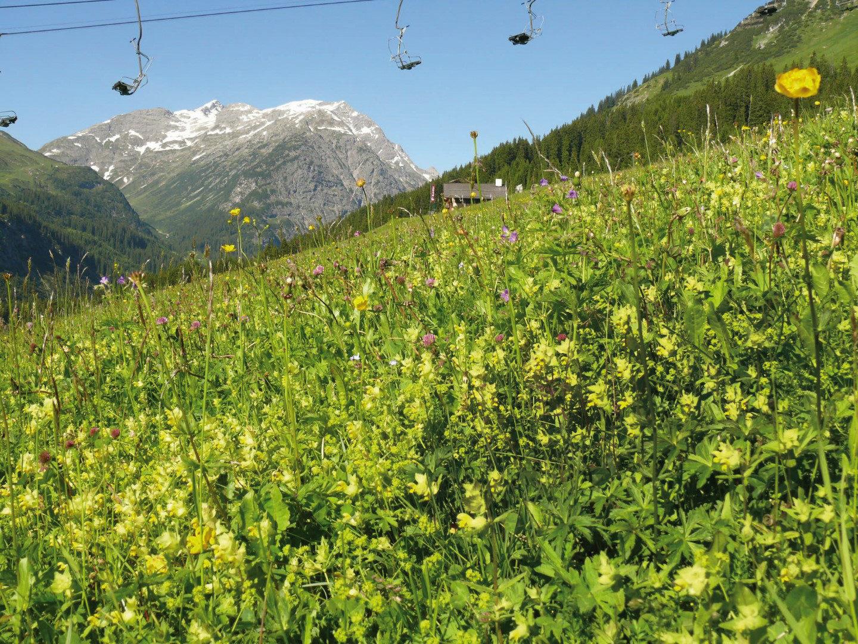 Blumenwiese im Skigebeit Lech – der Beweis für eine üppige Vegetation. © Skilifte Lech